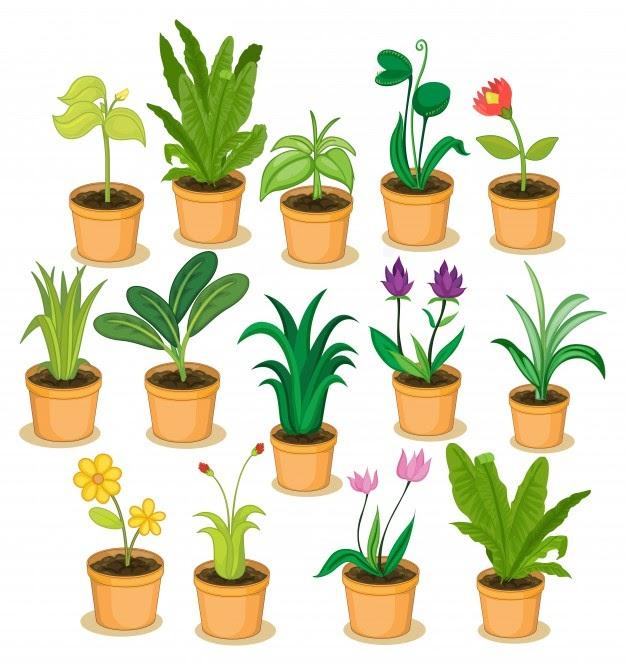 jenis tanaman indoor terbaik